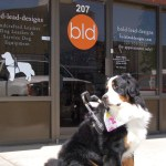 bld 02 shop front with usher25191347 - Service Dogs in Action