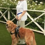 casey shannon and gabe - Service Dogs in Action