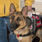 copy 0 medina eva msh cape banner badge - Service Dogs in Action