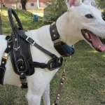 dee dee lim - Service Dogs in Action