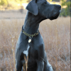 Leather Martingale Collar - chain and leather adjustable limited slip