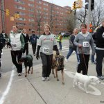 jami and cee kranz irondog - Service Dogs in Action