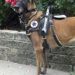 jami kranz perfectly fitted - Service Dogs in Action