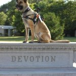 juno devotion - Service Dogs in Action