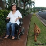 kai dara and noa with wheelchair lead photo by craig fujii - Service Dogs in Action