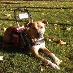 karma kosak - Service Dogs in Action