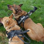 msh bah harness comparison - Service Dogs in Action