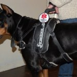 msh chobe - Service Dogs in Action