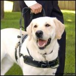 msh clark - Service Dogs in Action