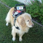 reese kurz 004 - Service Dogs in Action