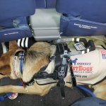 Service Dogs in Action