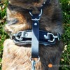 Tracking / Agitation Harness for working dogs (padded, 2-latch, heavy-duty leather)