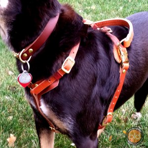 Medium on Kelpie1 - Everyday Working Harness