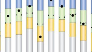 Photo of ماذا تعرف عن العلامات الزرقاء والصفراء والخضراء والبيضاء في نتيجة أولى وثانية ثانوي؟