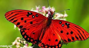 "Photo of ""الفراشات لا تتعلم أبدًا"""