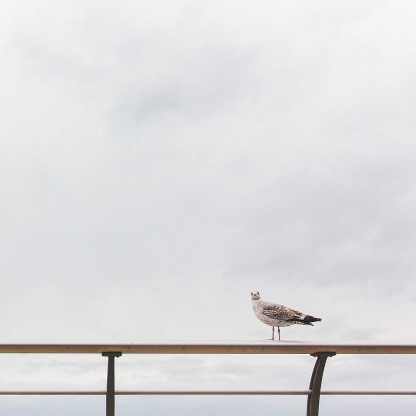 seagull-square