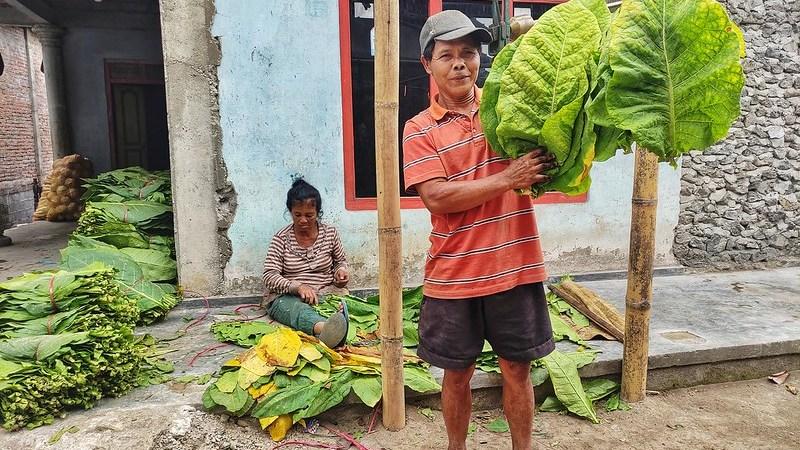 petani tembakau di tengah kenaikan cukai