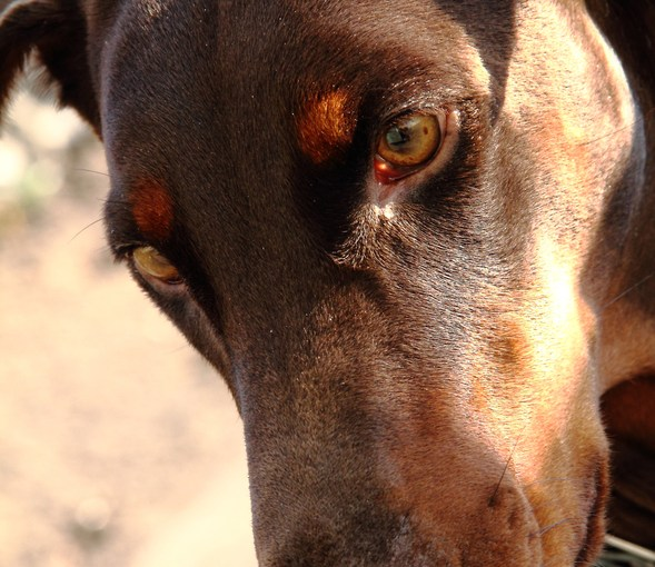 BolenReport – Old Dog – New Tricks…