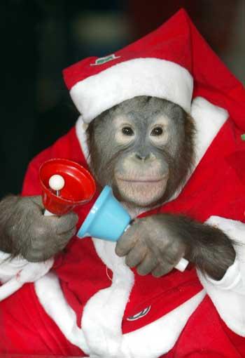 Carla in Orangutan Hat