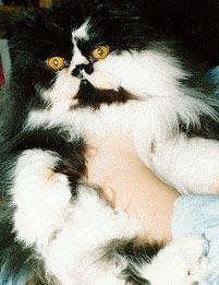 Jack the Cat!