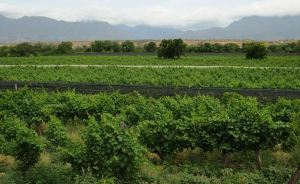 Wines of Bolivia