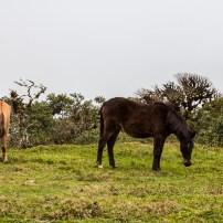 wild horses?