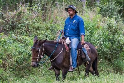 Cowboy med cocablade i kinden