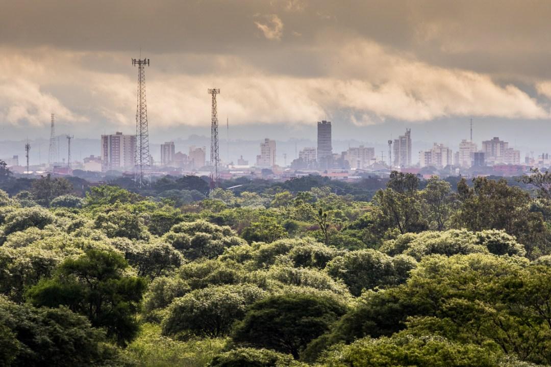 tørskov med byen Santa Cruz i baggrunden foto Henrik Egede-Lassen