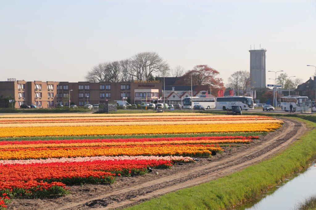 Top 10 Hotels in der Nhe der Blumenfelder von Holland