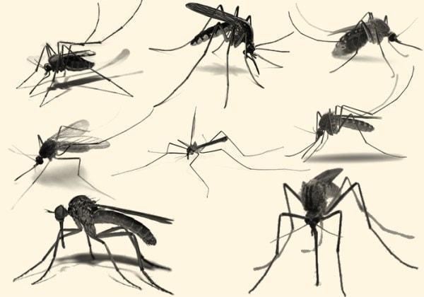 West Nile Virus Avis Bologna