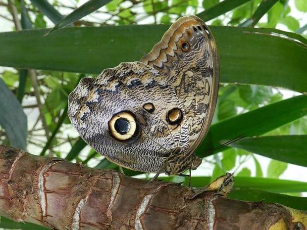 Foto Cervia la casa delle farfalle  1 di 17  Bologna