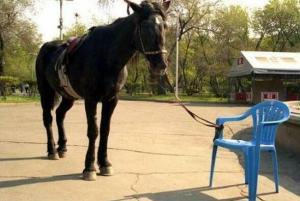 Cavalo_amarrado_cadeira