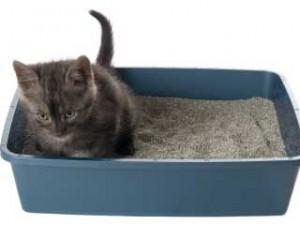 liteira-para-gatos-300x225