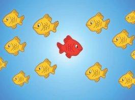 um peixe vermelho nadando em sentido contrário a todos os peixes amarelos