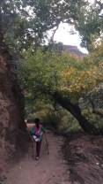 花园溪谷里的秋叶