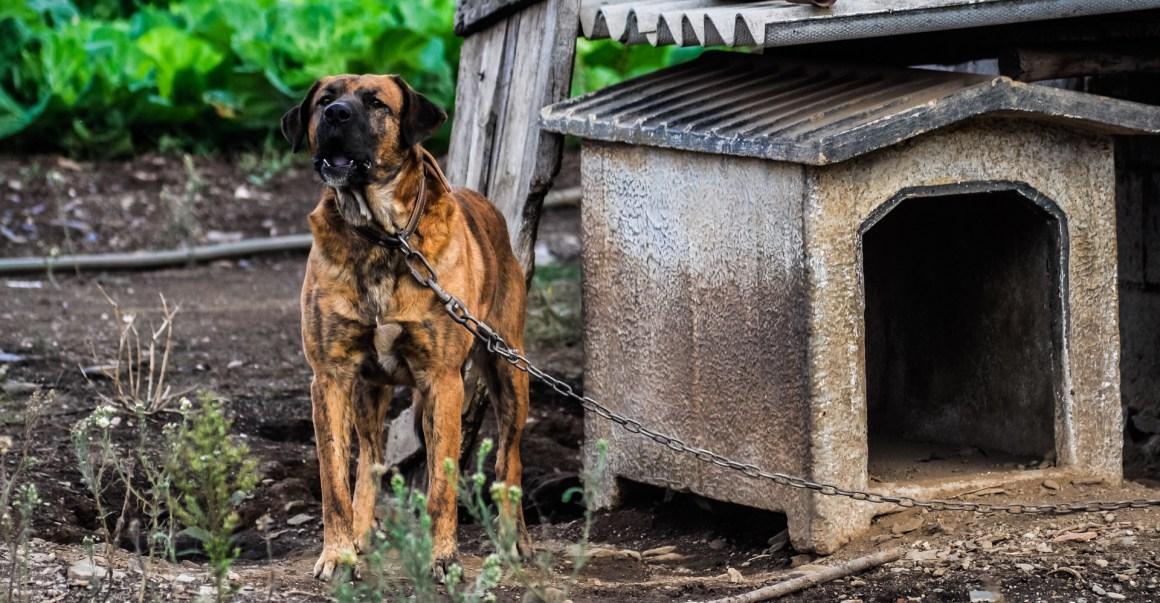 anjing dirantai di luar kandang