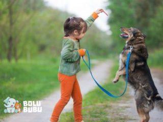 metode pelatihan anjing