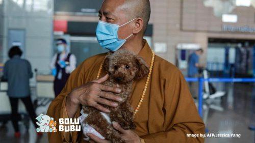 biksu menyelamatkan 8000 anjing