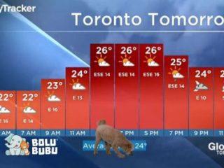 anjing menginterupsi laporan cuaca