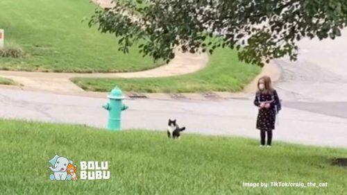 kucing menemani pemiliknya menunggu bus sekolah
