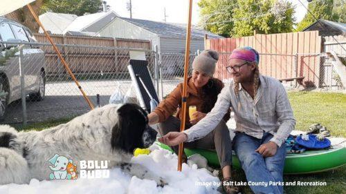 salju untuk anjing