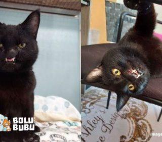 adopsi kucing sumbing