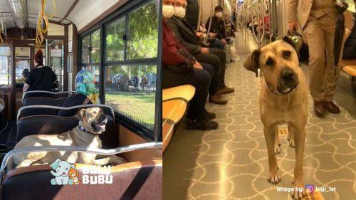 anjing di transportasi publik