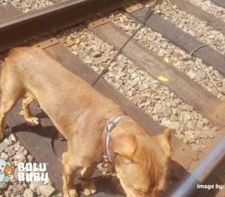 anjing terikat di rel kereta