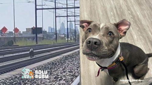 menyelamatkan anjing di rel kereta