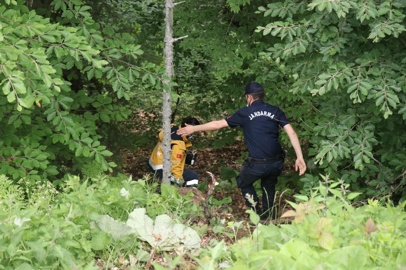Bolu'da devrilen ağacın altında kalan işçi hayatını kaybetti