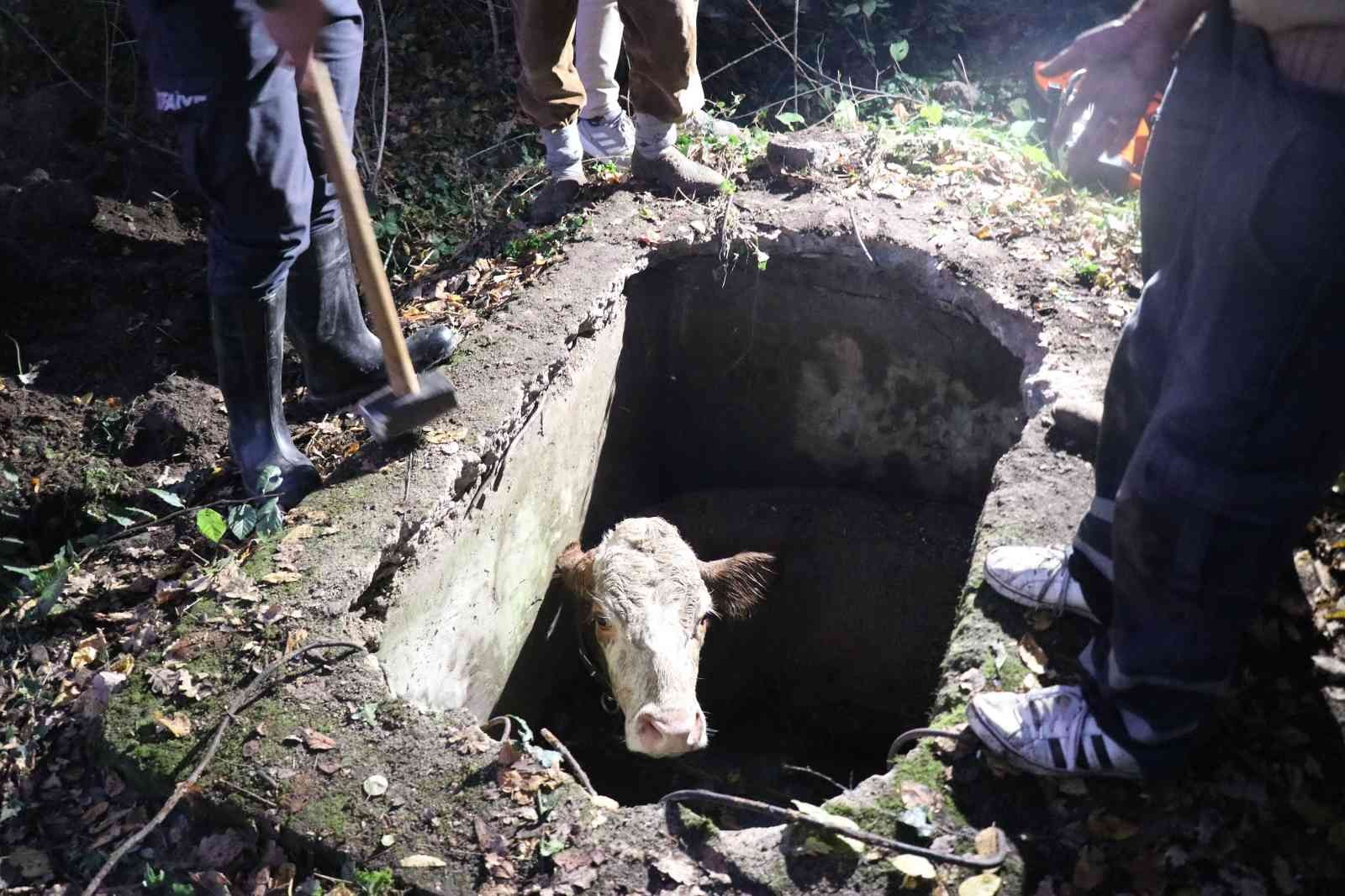 Su kuyusuna düşen ineği itfaiye halatla bağlayarak kurtardı