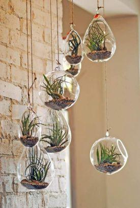 Des succulentes dans des petites bulles suspendues...déco légère et originale ! (deavita.fr)