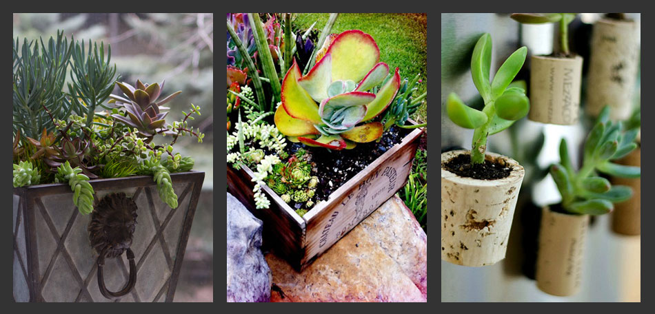 Planting Succulents Container Gardening Ideas Bombay Outdoors