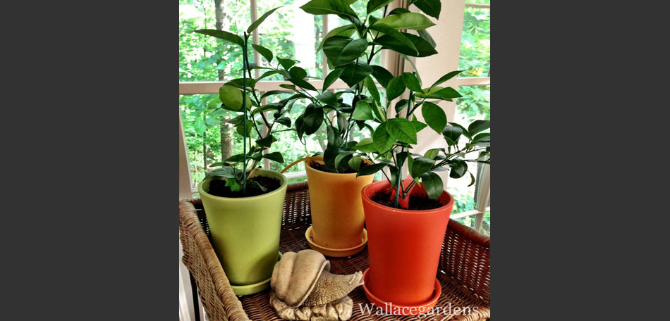 Winter Gardening Ideas For Christmas The Holidays Bombay Outdoors